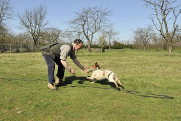 Tawnyhill Boarding Kennels - Gundog training with Tony Price