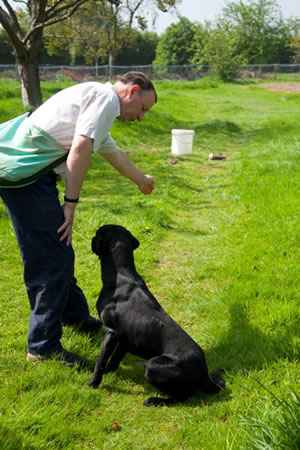 Tawnyhill Gundogs - Tony Price training a gundog